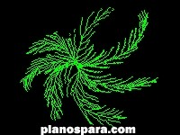 imagen Planos de palmera